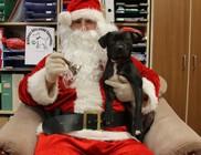 Köszönjük támogatóink segítségét - állatmentő kutyakarácsony