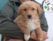 Utcára kidobált kutyusok mentése - fotókkal