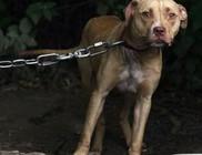 2016-tól súlyos pénzbírságra számíthat, aki láncra köti a kutyáját