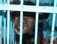 Október 4. az Állatok Világnapja