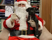 Karácsonyra állatstop - videóval