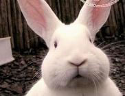 Húsvét: élő állat STOP!