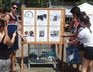 Állatvédők a Szigeten 2017 fesztiválon