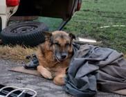 Kutya őrizte az autóroncsot, gazdája a balesetben meghalt