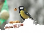 Hóesésben életmentő a madáretetés