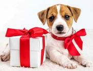 Élő állatot karácsonykor ne... - videóval