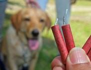 PetárdaSTOP-ot kérnek az állatvédők Szilveszterre