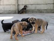 Október 4. az Állatok Világnapja - Állatvédelem: van feladat bőven