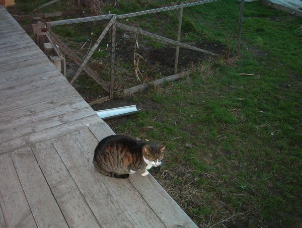 Göbmi macskám