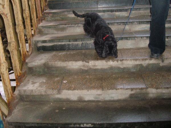 Sissy  lépcsõzik