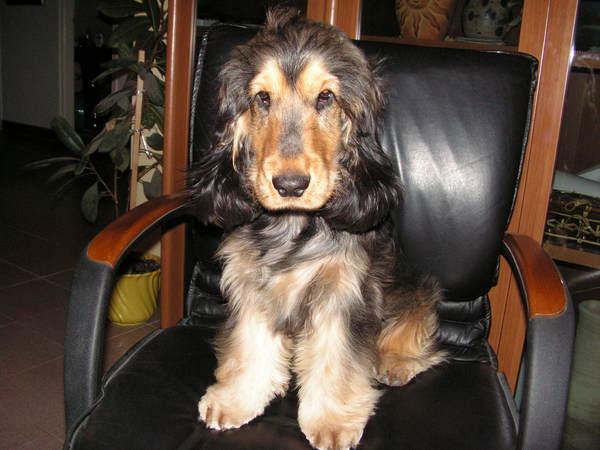 Rudi kutya