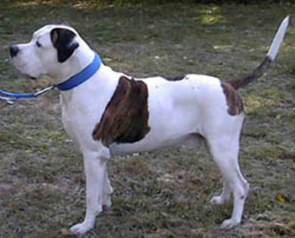 Fülöp kutya