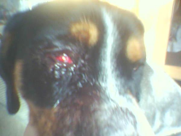 Kegyetlnség a kutyámmal!Hozzá szólni a fórumon!