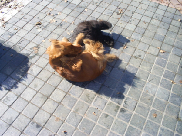 Edy és Fáni játék közben