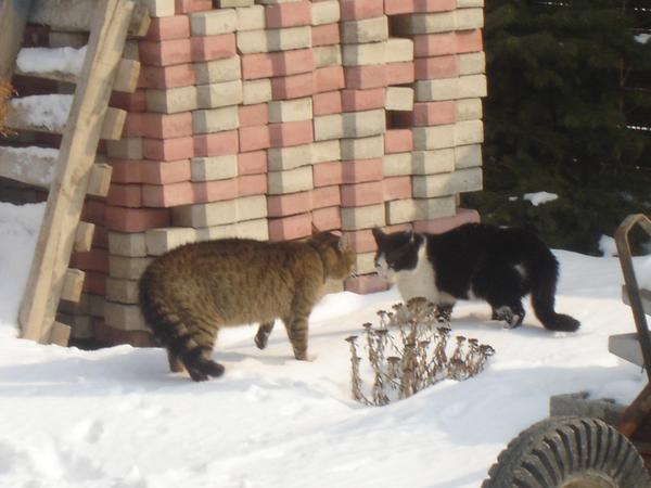 Raffaello & mégegy macska.....