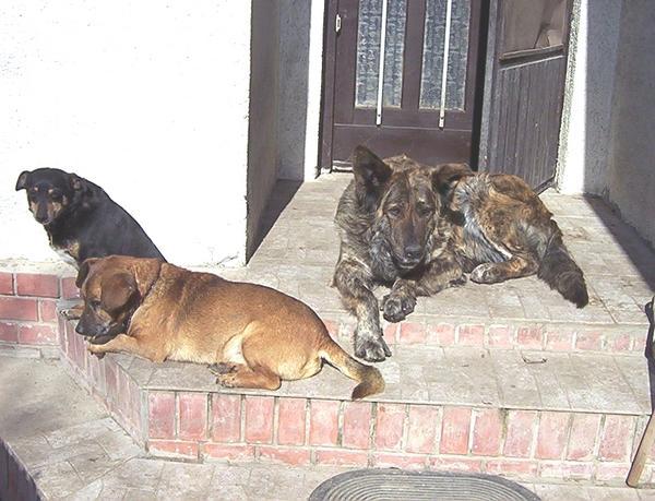 Muki, Tomi és Kyra / A kis házörzõ csapat