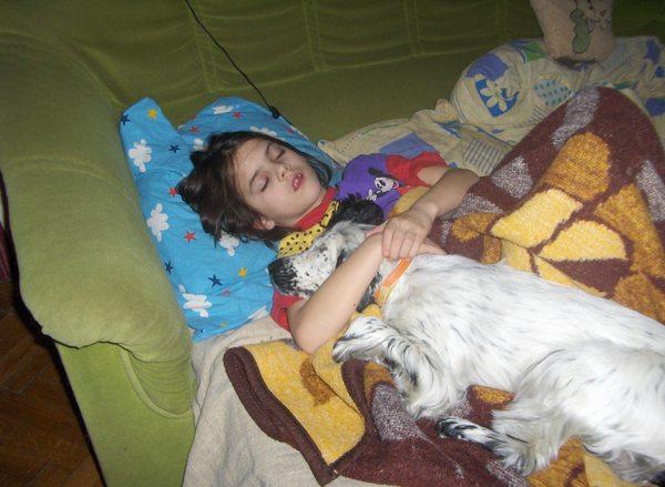 Alvás a kutyussal
