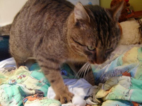 Raffaello.....és az ágy...elõkészíti az ágyat az alváshoz...:)
