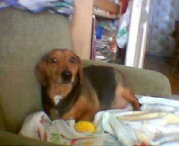 Arany Husika a foteljában sárga színû sipi sünijével