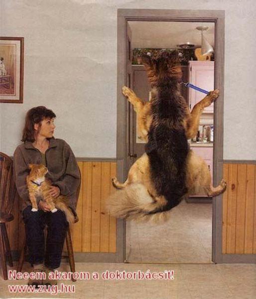 Az állatorvosnál: a félõs kutyával nehéz!