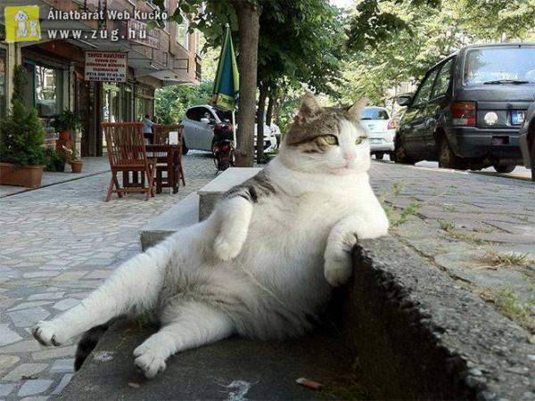 Macska lépcső