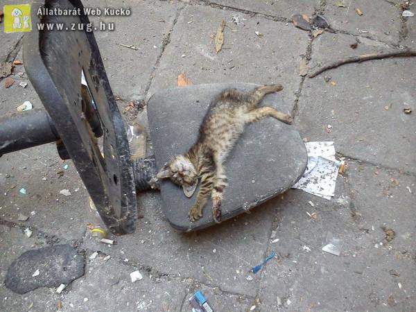 S.O.S. ideiglenes befogadót vagy gazdit kereső cicák