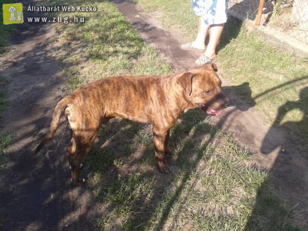 Zsombói kóbor kutyus