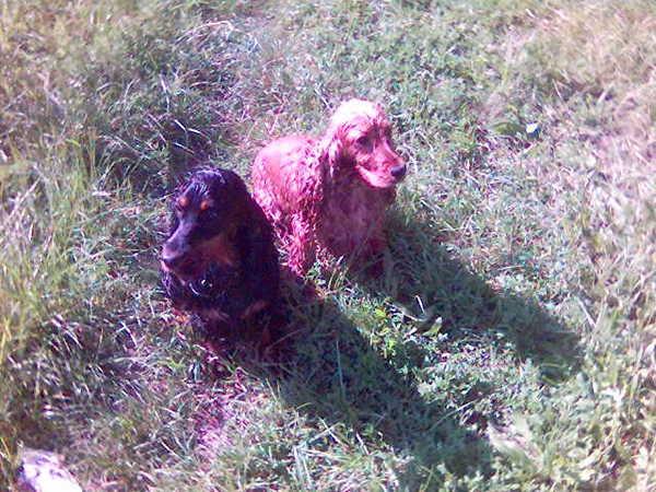 Jenny és Bonny