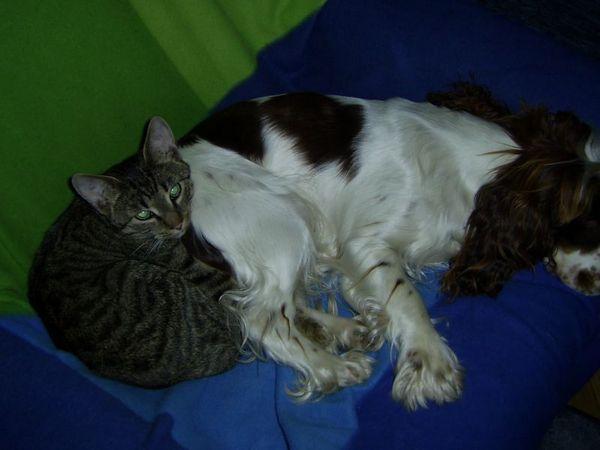 Szürke cica & Kyra 2
