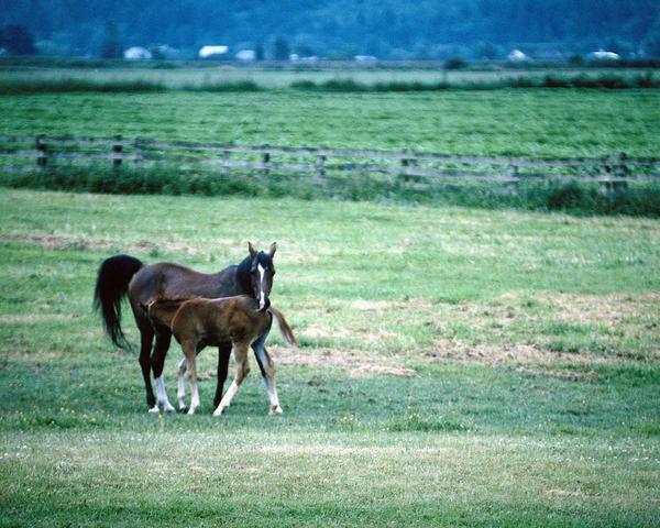 Réten lovak