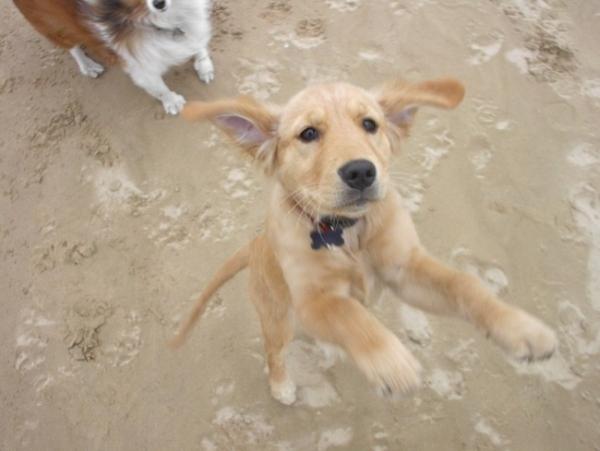Hurrá, nyaralunk: játék a parton kutyákkal :D