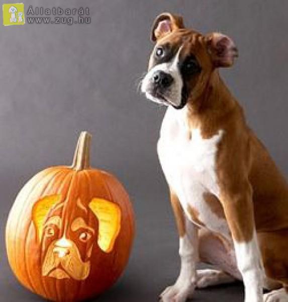 Közeleg a halloween