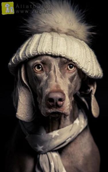 Kutya hideg van