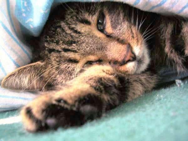 Lilike alszik :)