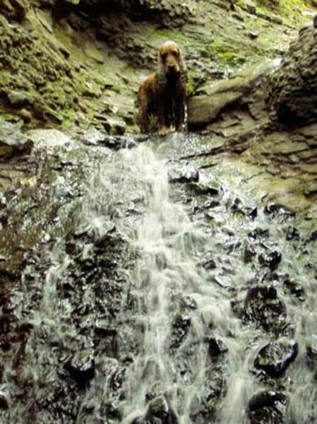 Spankó a vízesésnél