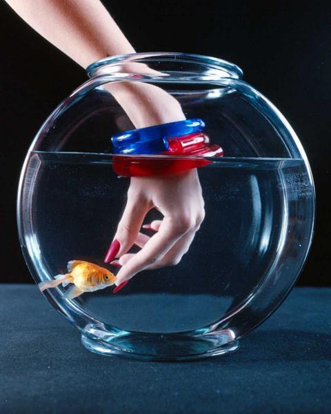 Egyszerû akvárium