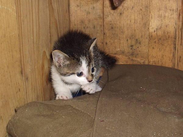 Kicsi Mici