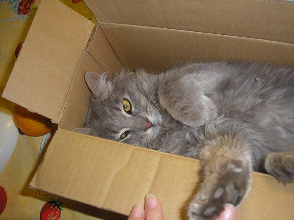 A kis cicus a dobózban