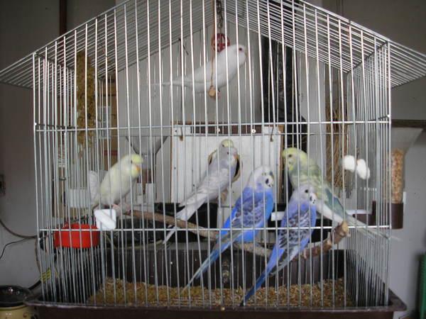 A papagáj család