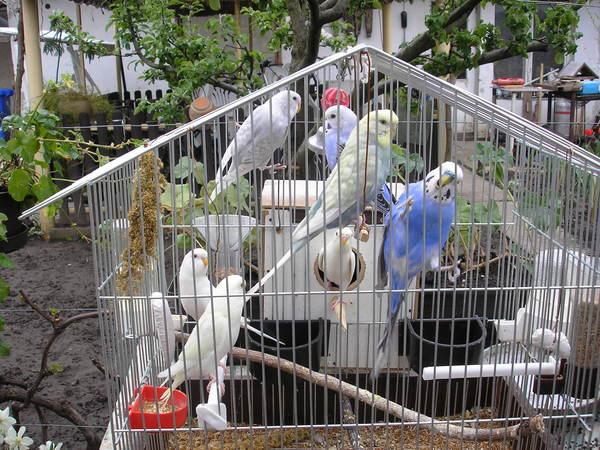 A papagáj gyerekek ki repültek az oduból