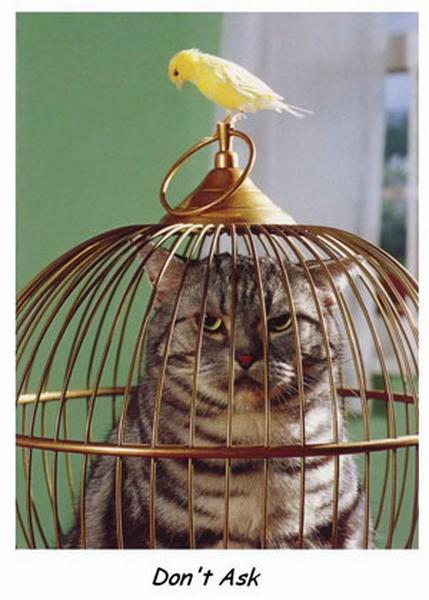 macsek és madár