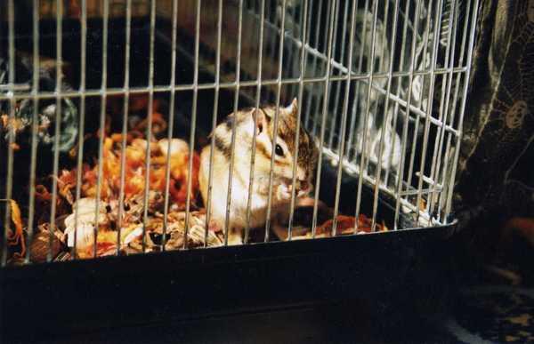 Bubi mókus