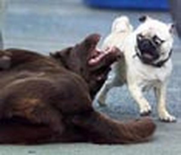 kutyák egymás között