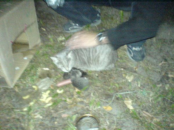 Megmentésre váró cica család