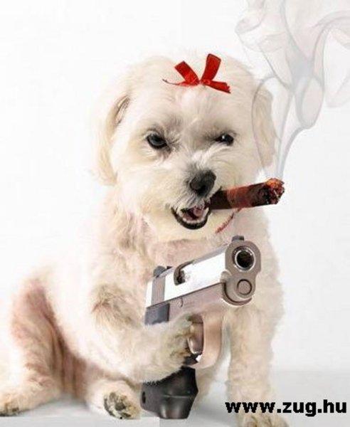 Psycho DOG