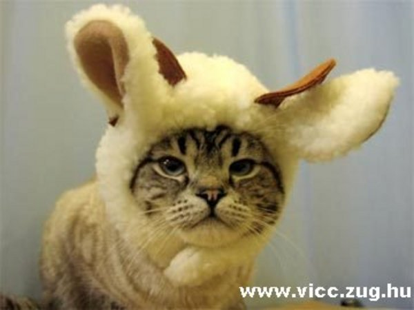 Cica vagy nem?