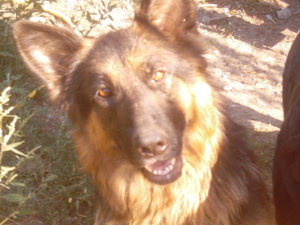 Olga kutya, gazdit keresek!!!!