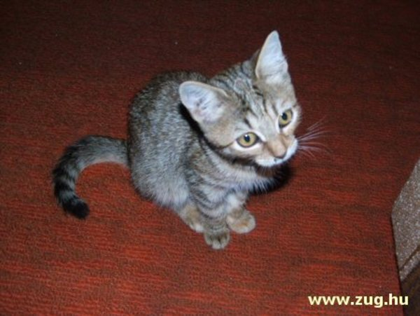 Stefánia, a befogadott cica