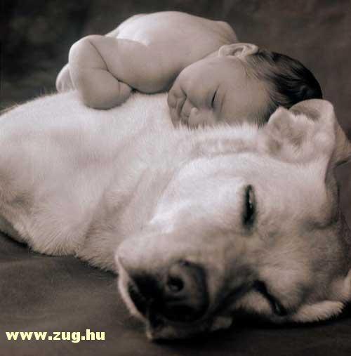 Kutyus, mint kispárna