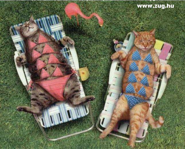 Napozó cicák